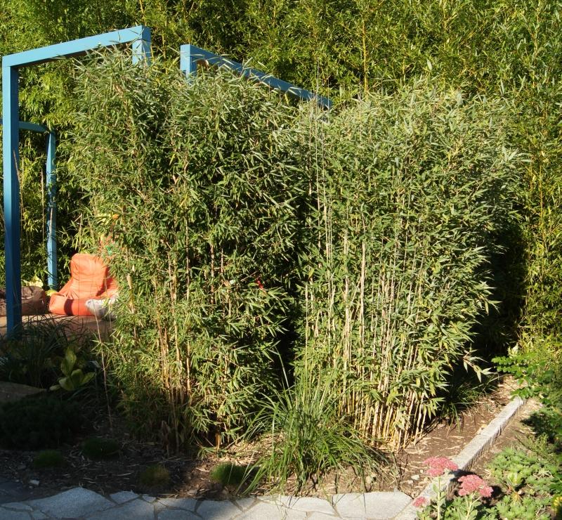 Fargesia spathacea 'Red Zebra'® ('Japo 51' EU-S) als Sichtschutz im Park der Gärten gepflanzt